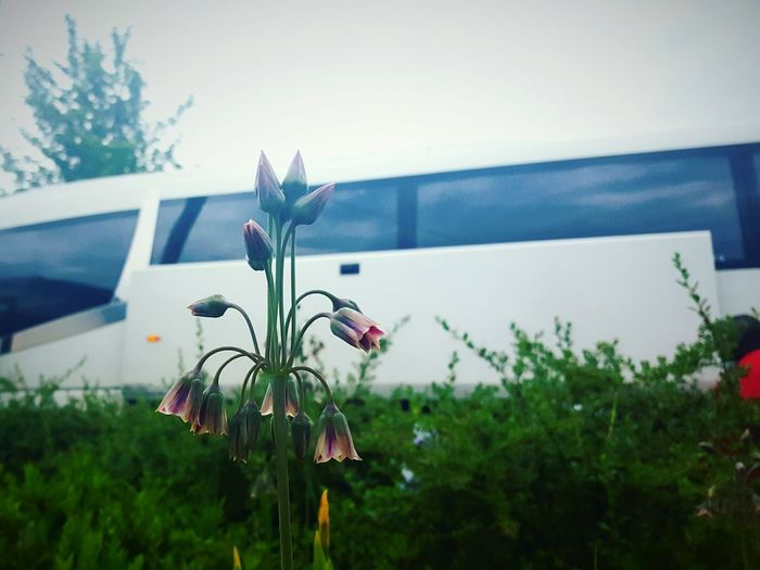 Before Ten Waving Goodbye Coach Trip Flowers Beauty In Nature Close-up Flower