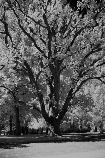 Black And White Infrared Monochrome