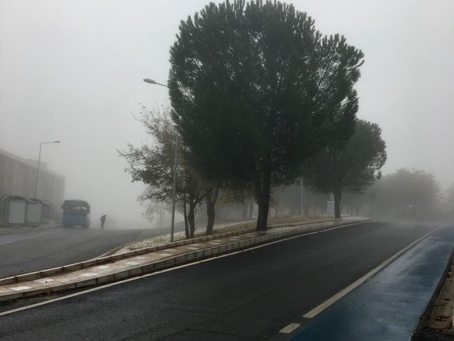 Msku Foggy Morning Day Tree Road Nature Transportation The Way Forward School Bus