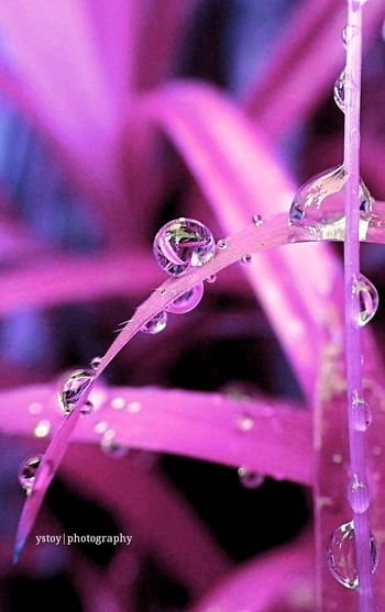 droplets... Eyeem Philippines EyeEm Macro Droplets Rainy Days