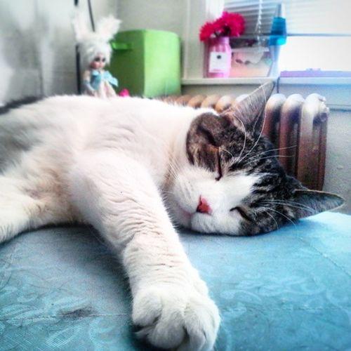 Catsofinstagram Ilovemycay