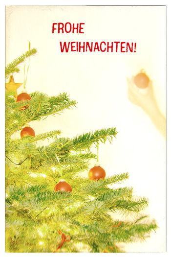 Frohe Weihnachten Weihnachten Frohe Frohe Weihnachten Frohes Fest Frohes Christmas Weihnachtsbaum Frau Schrift Schriftzug Schmücken Dekorieren Weihnachtlich Zuhause Karte Weihnachtskarte Postcard German German Language