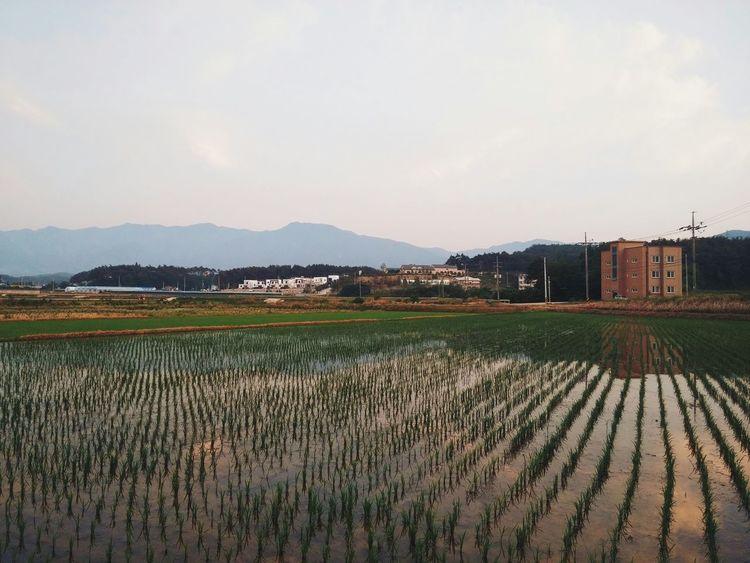 Countryside Rice Field Agriculture Farm Korea