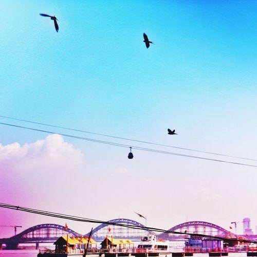 飞鸟 The Birds Birds River Bridge Enjoying Life