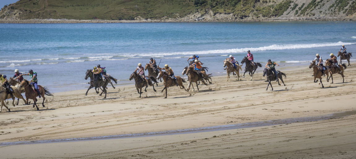 kaiaua beach races Animal Animal Themes Animal Wildlife Beach Beach Races Day Group Of Animals Horse Horseback Riding Land Nature Outdoors Riding Sand Sea Sport Water