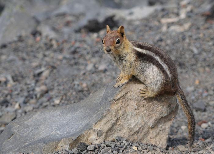 Squirrel sitting on rock