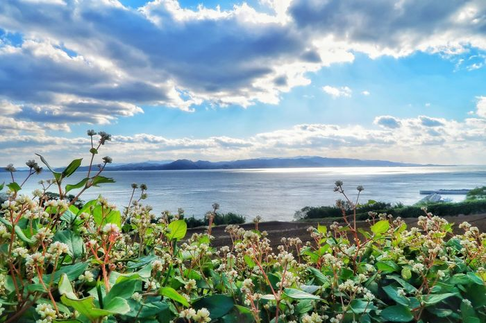 Flower 花 草花 野花 海 空 雲 Nature Beauty In Nature Growth Cloud - Sky Plant Day Sky Water Sea No People Mountain Scenics Foreground Flower Head Fragility Uncultivated Freshness Tranquility