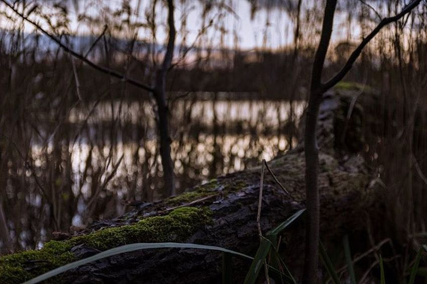 Beautifull nature is everywhere. Even if your sitting on a tree in gras. ;) Nature Nature_collection Naturelovers Landscape Landscape_photography Lake View Dermacke Mackes_fotografie EyeEm Nature Lover Tree Focus Lake Ewaldsee Sonyalpha A99 EyeEm Best Shots Eyemphotography