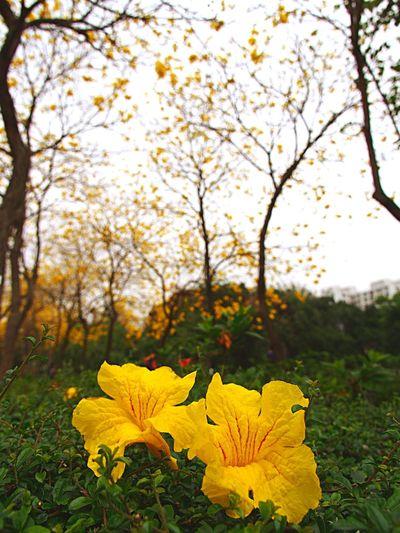 Yellow Flower Yellow And Green Green And Yellow  Naturelovers Nature Flowers