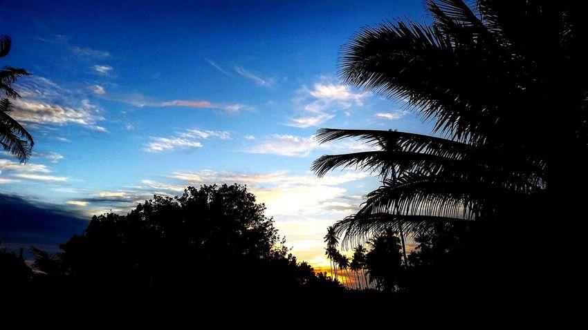 Nicol Luna. Nature Photography Palmas Playas Viaje Puesta De Sol Michoacan, México Photography Playa Jardin Sun Collection Photos
