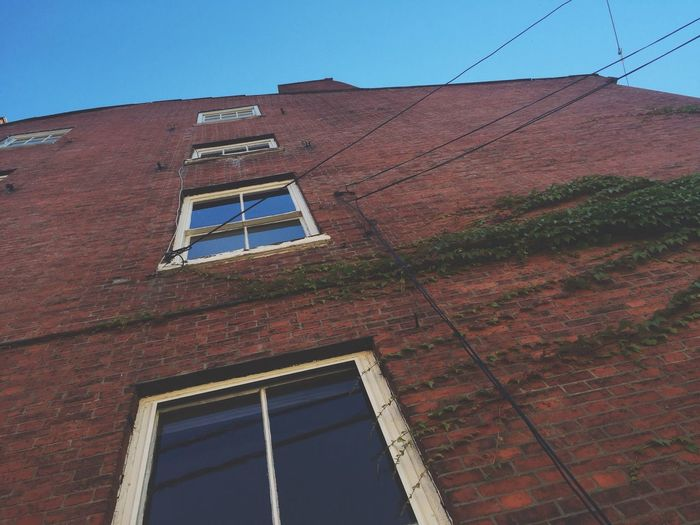 Brick Wall Brick Building Urban Architecture Windows Perspective Looking Up Building Building Exterior Ivy Ivy On Building Building And Sky Red Brick Old Buildings Tilted