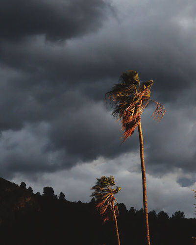 Low angle view of coconut palm tree against cloudy sky