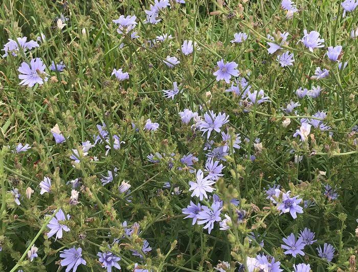 Blue flowers blooming on field