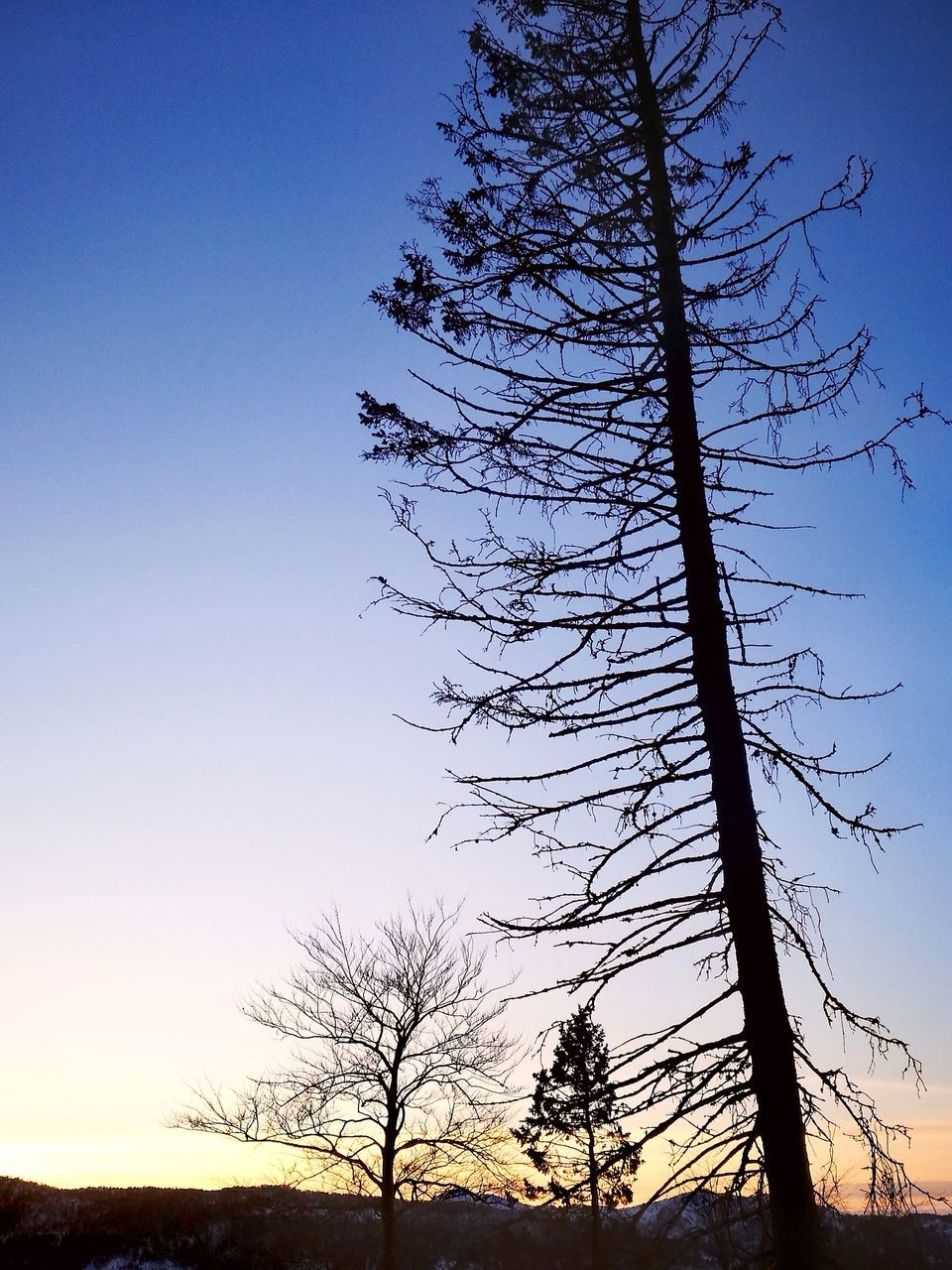 tree, bare tree, nature, beauty in nature, tranquility, tranquil scene, scenics, branch, landscape, silhouette, no people, tree trunk, outdoors, low angle view, sky, sunset, clear sky, growth, day