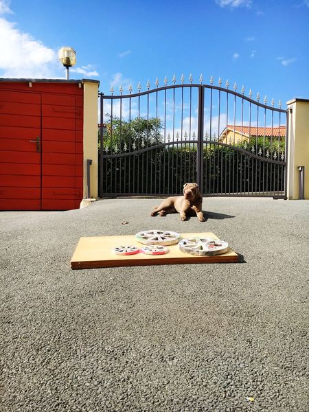 Sun And Sky Dogs Sun Dog Creativity Craft Paper Papercraft Paper Art Wheels Drying Dry Relaxing Enjoying Life Animal_collection Lyon France Sharpei Shar Pei Home Garden Always Be Cozy