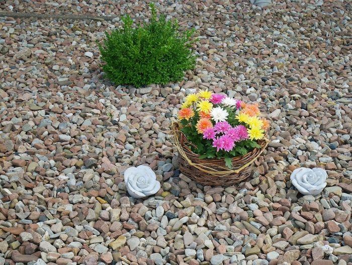 Eyrem Flowers