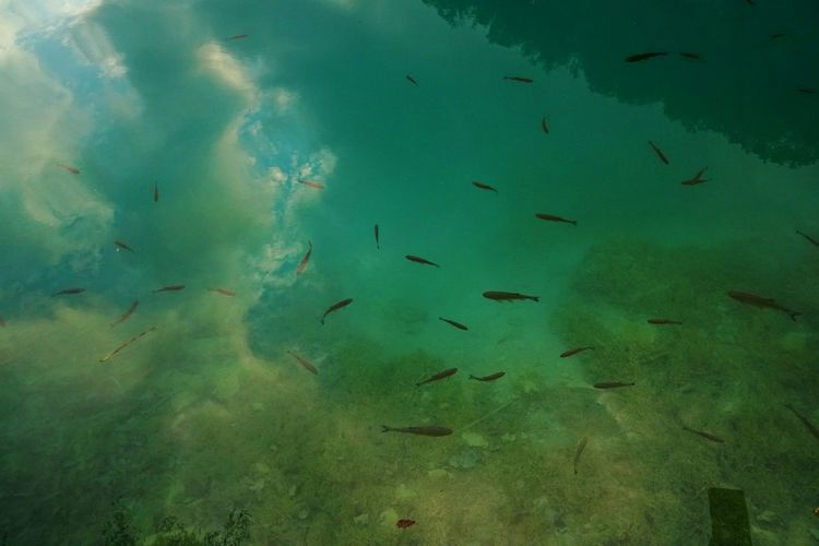 Fish in Lake and Sky Nature Animal Animal Themes Animals In The Wild Clear Water Ecosystem  Fish Fish Lake Group Of Animals Lake Mirror Water No People School Of Fish Sea Sea Life Sky In Water Swimming Turquoise Colored UnderSea Underwater Water