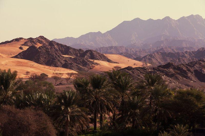The Great Outdoors - 2017 EyeEm Awards Fujairah Mountain Range Desert United Arab Emirates Date Palm Tree Desert Landscape Fresh On Market 2017