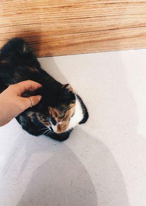 Kedi Cat Sweet Animal Pets Istanbul Göztepe