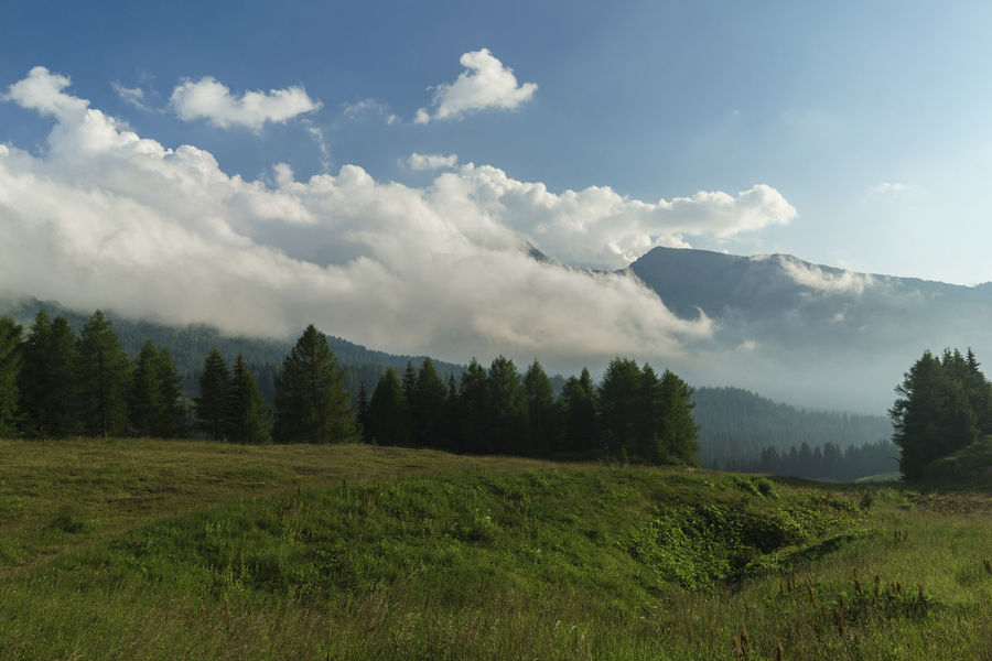 Beauty In Nature Cloud Cloud - Sky Cloudy Day Field Grass Grassy Green Green Color Growth Idyllic Landscape Mountain Mountain Range Nature No People Non-urban Scene Outdoors Passo Rolle Remote San Martino Di Castrozza Scenics Sky Tree