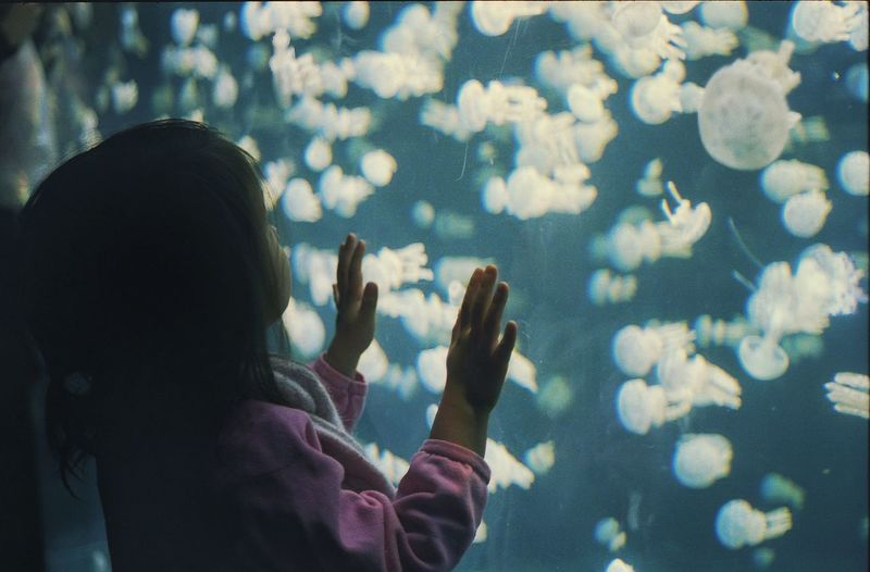 Girl looking at jellyfish swimming in aquarium