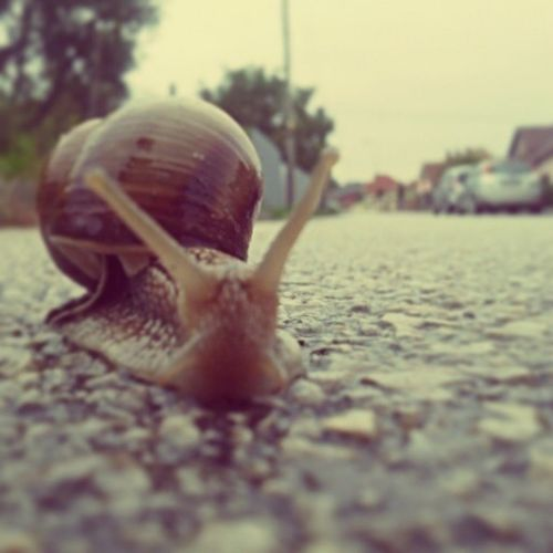 Got in my way on rainy afternoon:) Snail Animal Nature Street Rain Rainy Slovakia Slovak Slovensko Insta_svk Instagood Like4like Follow4follow