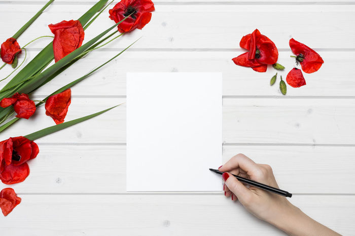 White ship deck tabletop scene with female hand writing on a white blank paper surrounded by poppies Female Hand Blank Blank Paper Drawing Female Hand Writing Flat Lay Flower Freshness Hand Human Hand Indoors  Nature Pencil Plant Poppies  Poppy Poppy Flowers Popular Photos Red Red Flower Spring Flowers Table Tabletop View From Above White Table
