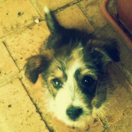 Little Wonderful Dog