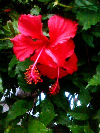 Nature 🌺