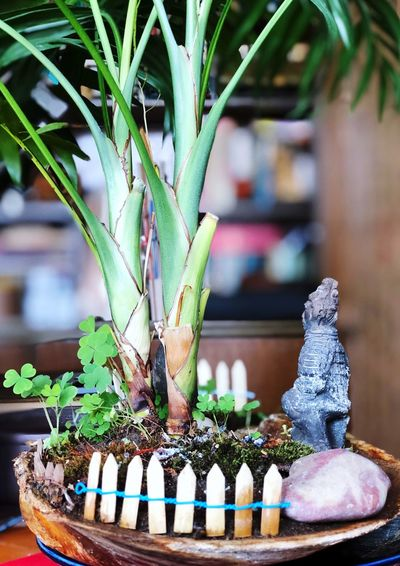 Plant No People Focus On Foreground Green Color Close-up Nature Potted Plant Growth Beauty In Nature Food Day Decoration Table Plant Part Outdoors Tree Representation Leaf Art And Craft