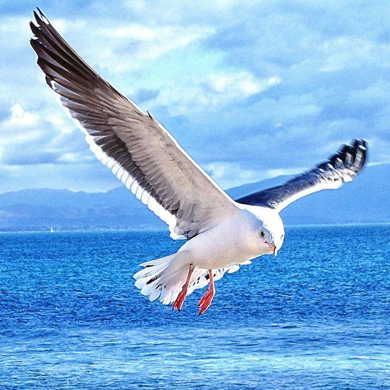 Animals Beachphotography 3emes Ensenada Birds_collection Playa3emes