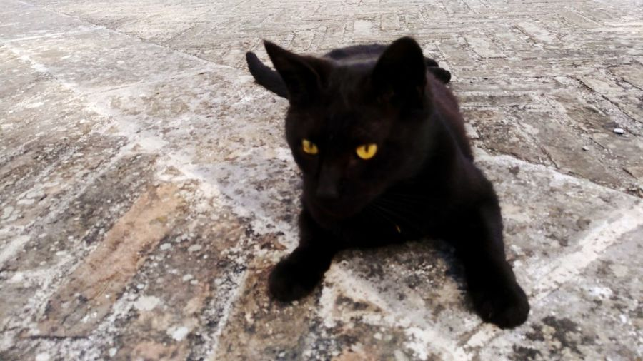 Domestic Cat Day Black EyeEmNewHere Urbino