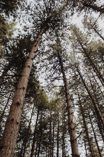 breath. Tree