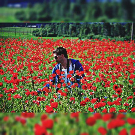 лето цветы маки полемаков Природа красота
