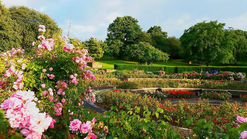 Beautiful Nature #rose #beauty #nature #flower #love #eyeem #sun