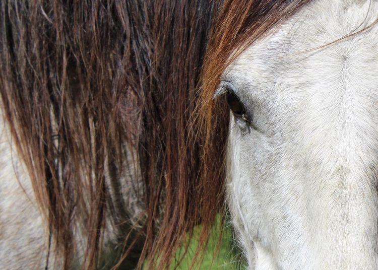 Mighty Tadaa Community EyeEm Gallery Horse Photography
