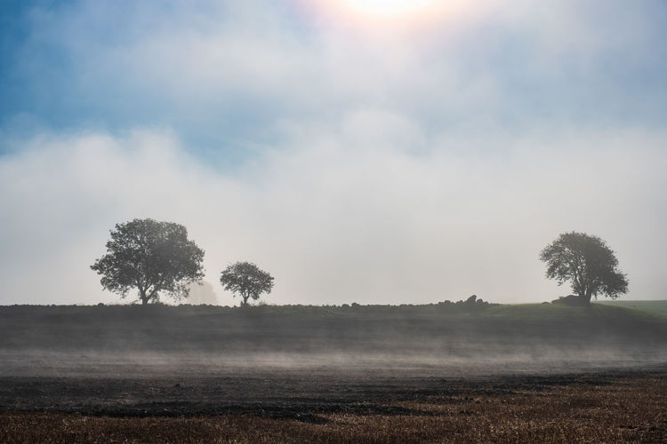 Misty morning on a field with tree silhouettes