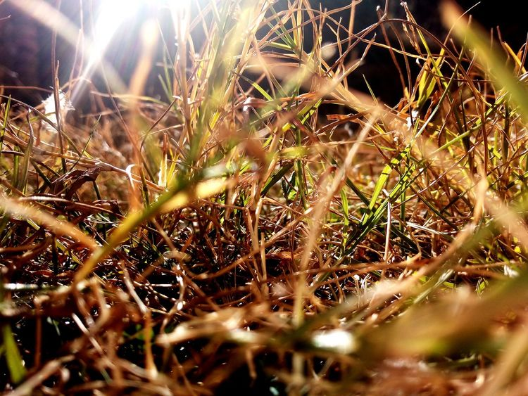 Wild Lover #closeup #greenery #greengrass EyeEm Selects Nature Growth No People Outdoors Plant Close-up EyeEmNewHere