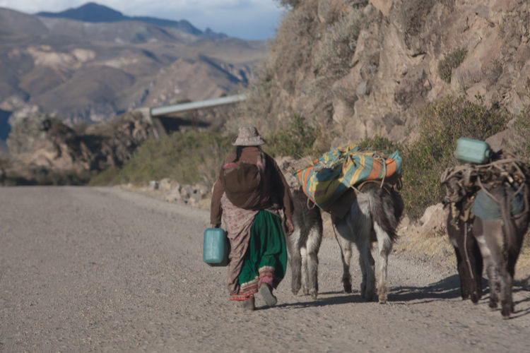 Full Length Rear View Of Woman Walking With Donkeys On Dirt Road