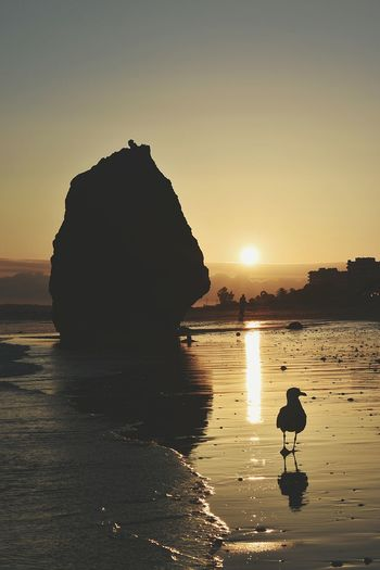 Seagull on the beach at sunset Seagulls And Sea Seagull On The Beach Seagull On The Ground Seagull At The Beach Seagull And Sunset Sunset_collection Sunset Silhouettes Afternoon Water Sea Sunset Beach Silhouette Summer Sun Reflection Sunlight Sky Rock Formation Coastline Seascape Calm Rocky Coastline
