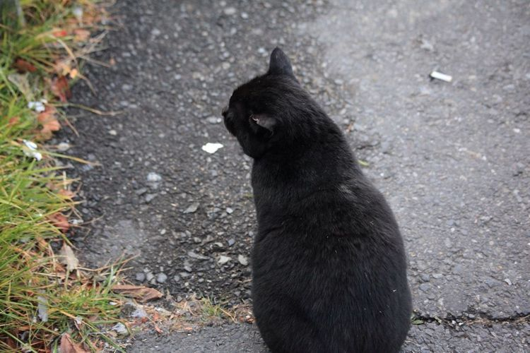 The Black Cat Came Near Me.The Black Cat Which Has Lacked One Ear. It Was Eaten By The Rat?⑻