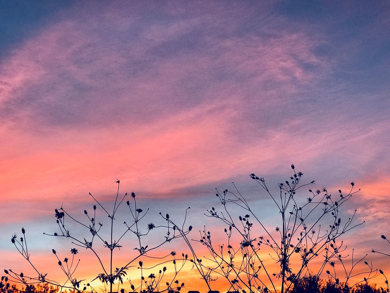 sunset, orange color, beauty in nature, nature, sky, pink color, scenics, tranquil scene, no people, silhouette, cloud - sky, outdoors, growth, bird, day