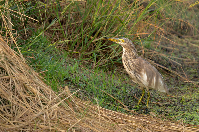 High angle view of bird perching on grass