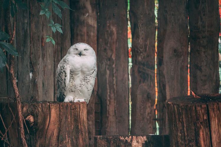 White bird perching on wooden post