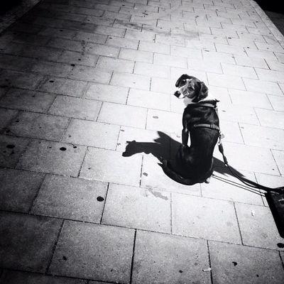 Freedom Iphonography Instamood Camera Igers City IGDaily Noir Bnw_society Urban Harry Blackandwhite Tweegram Dog Instagood Germany Statigram IPhone4s Instadaily Photography Photoftheday Bw Bwoftheday Iphonesia Iphonephotography Instagram F_harry Bnw Picoftheday
