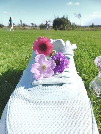 Mintgreen Flower Freshness Beauty In Nature Nature Growth Purple Close-up Field Bunch Of Flowers Green Color Flower Head Petal Day Outdoors Design Laces Familylife Joyfull Bright
