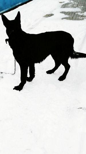 Dog Domestic Animals Day First Eyeem Photo Friends Black & White овчарка