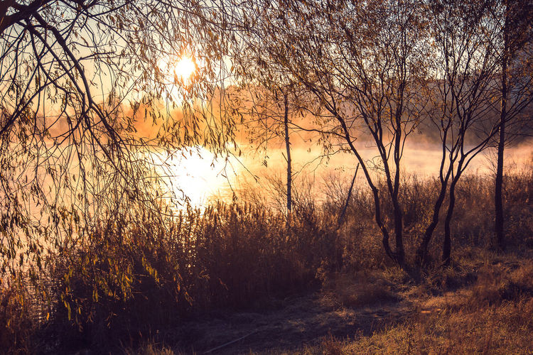 Grass Morningcity City Sunset Water Beauty In Nature Tree Belarus Fog Foggy Foggy Morning Morning Morning Sky Nature Fog City Waves Scenics Reflections Sky Sunshine Morning Light Sunlight Sunrise Lake Shadow