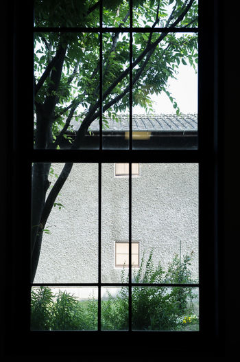 The Scenery Outside The Window Widow Day Glass - Material Home Interior No People The Window Tree 窗 窗外 風景