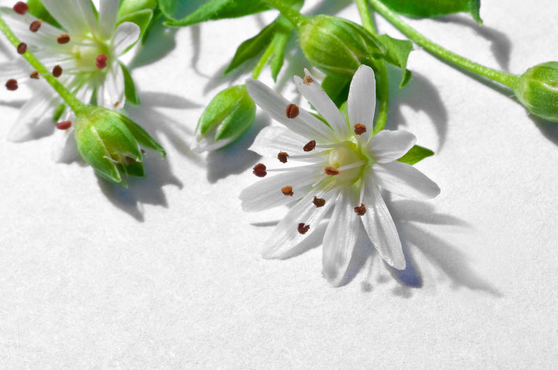 Plant White Color Leaf Plant Part Beauty In Nature Flower Fragility Nature Freshness Close-up No People Growth Flowering Plant Vulnerability  Shadow Green Color Day High Angle View Petal Indoors  Flower Head Pollen Springtime